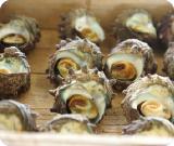 サザエや岩ガキ などの貝類も